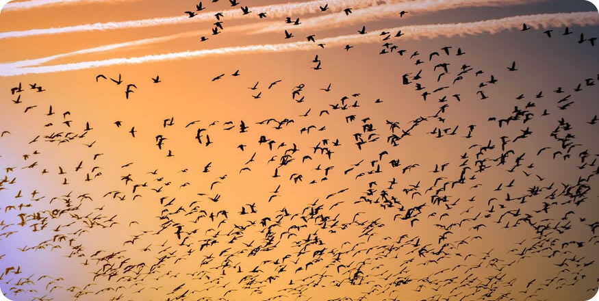 img-blog-cropped-migrate-1